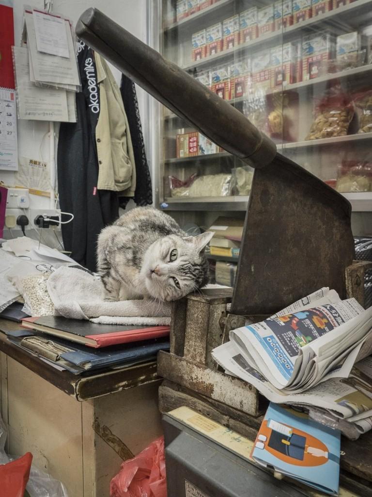 cats of hongkong 9 768x1024 - Potret Kehidupan Kucing di Daerah Pertokoan Hongkong yang Tidak Diketahui Banyak Orang