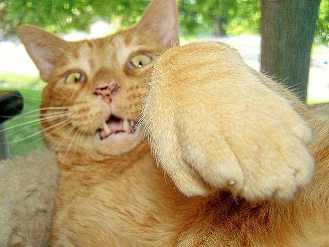 jalan setapak yang terbuat dari kerikil atau aspal dapat membahayakan kaki kucing.