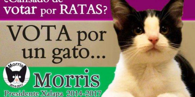 kucing ini jadi calon wali kota di meksiko rev 1 - Muak dengan Kinerja Pemerintah, Masyarakat Kota ini Memilih Kucing sebagai Walikota Mereka