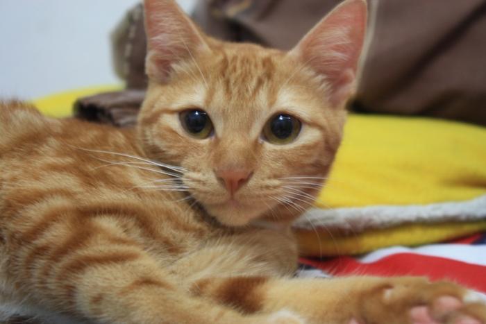 kucing kampung 2 - Keuntungan yang Didapat dari Memelihara Kucing Kampung