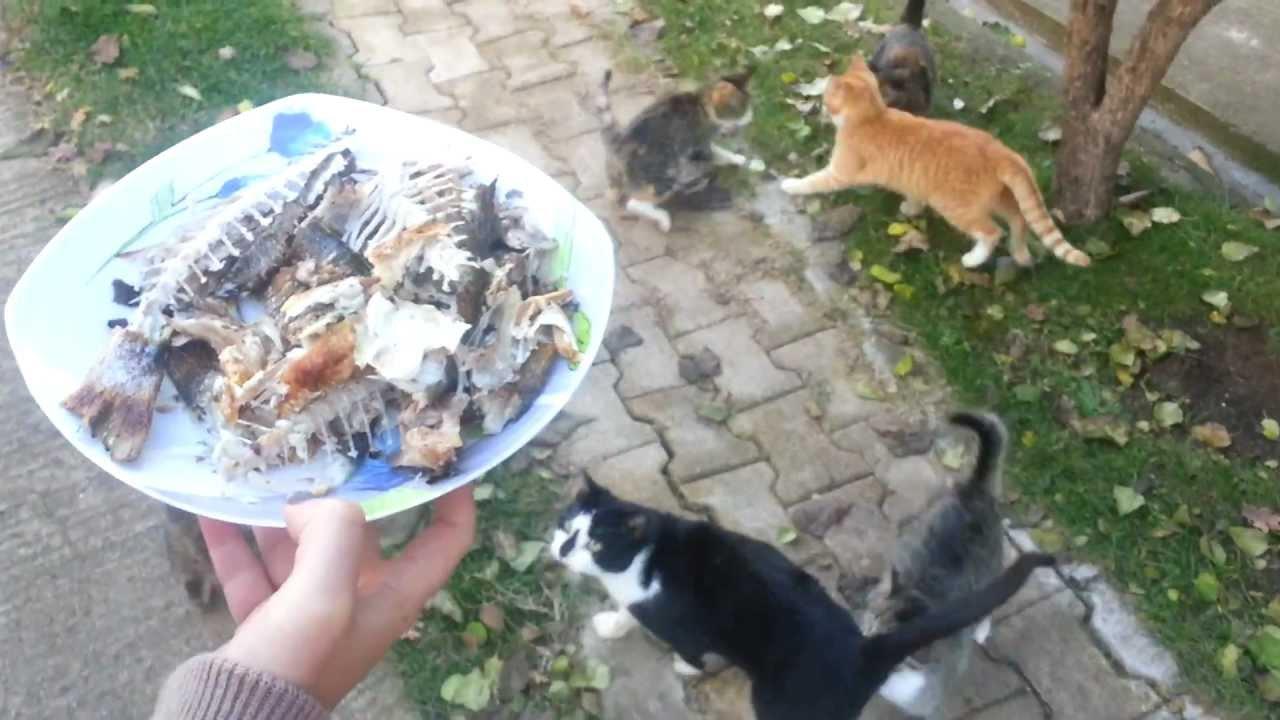 Keuntungan Yang Didapat Dari Memelihara Kucing Kampung Kucing