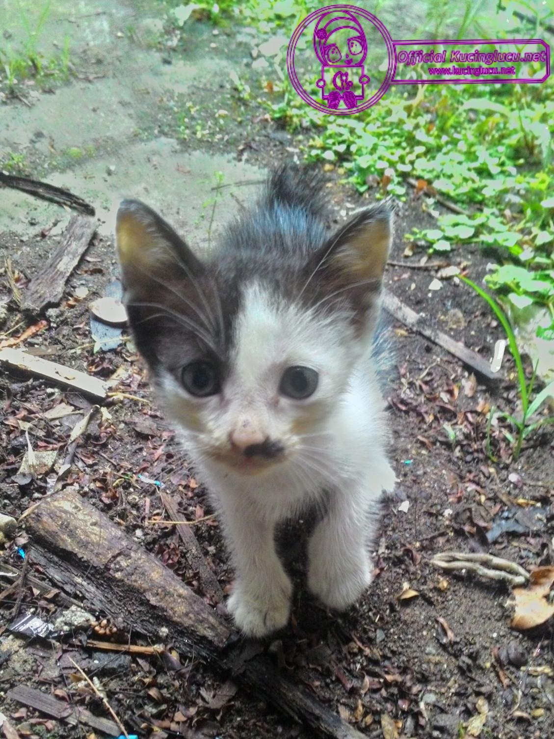 kondisi halaman rumah yang berbahaya bagi kucing.