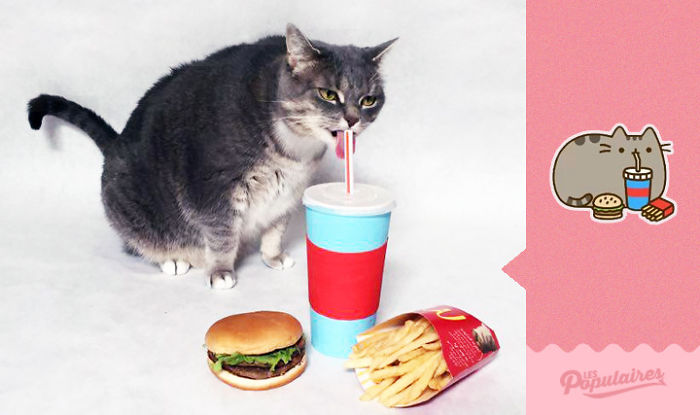 "pusheen - 12 Pose Kucing Ala Stiker Facebook ""Pusheen"" yang Menggemaskan"