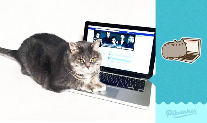 "pusheen4 - 12 Pose Kucing Ala Stiker Facebook ""Pusheen"" yang Menggemaskan"