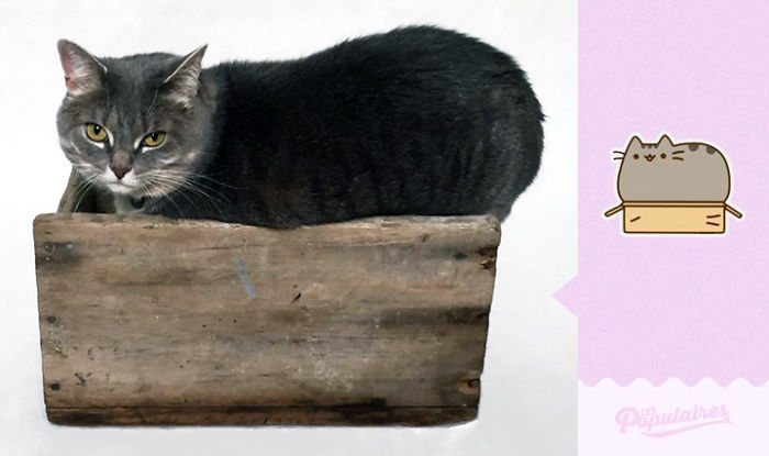 "pusheen7 - 12 Pose Kucing Ala Stiker Facebook ""Pusheen"" yang Menggemaskan"