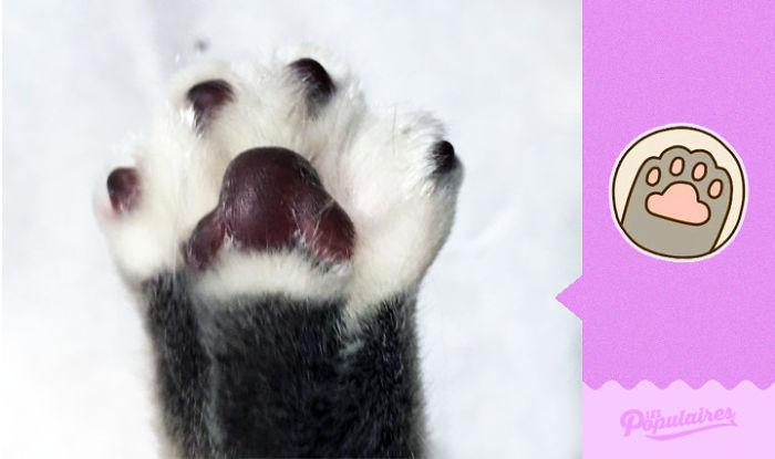 POse kucing mirip stiker Pusheen