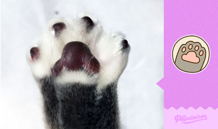 "pushen10 - 12 Pose Kucing Ala Stiker Facebook ""Pusheen"" yang Menggemaskan"