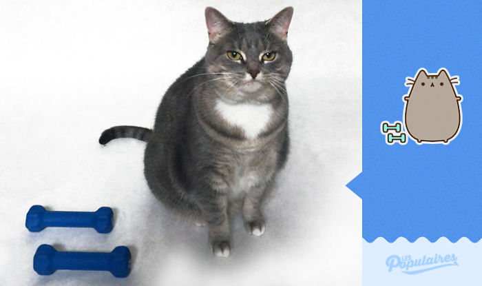 "pushen12 - 12 Pose Kucing Ala Stiker Facebook ""Pusheen"" yang Menggemaskan"