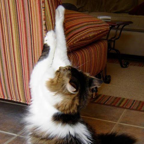 kucing mencakar - Kreatif ! Selamatkan Bekas cakaran Di Sofa Anda dengan Cara Berikut