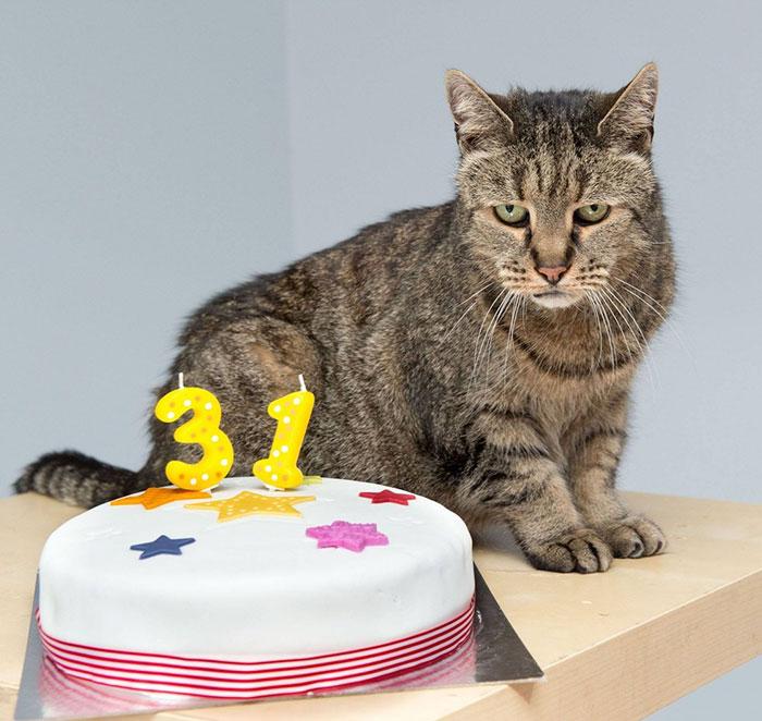 Nutmeg, kucing berusia 31 tahun dan tetap lincah.