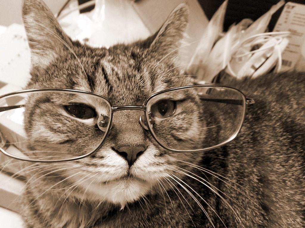 old cat 1024x768 - Cara Merawat Kucing Di Usianya yang Tidak Lagi Muda
