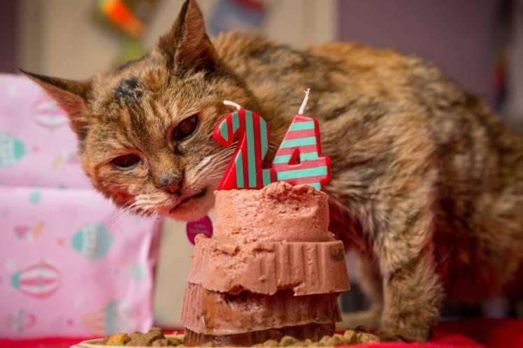 old cat2 - Cara Merawat Kucing Di Usianya yang Tidak Lagi Muda