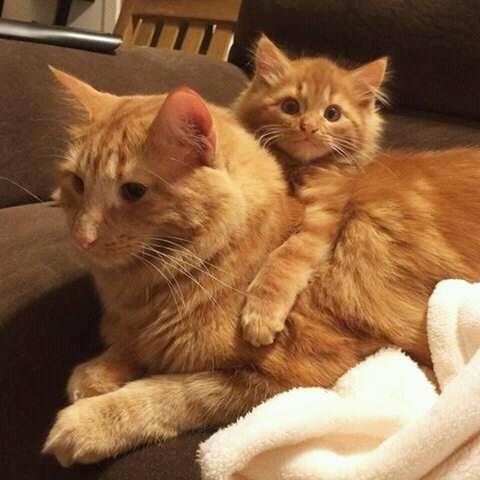 FB IMG 14723416407554984 - Alasan Induk Kucing Tidak Mau Menyusui Anaknya