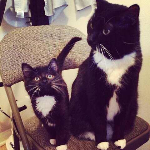 Alasan 1: Induk kucing tidak mengenali anaknya.