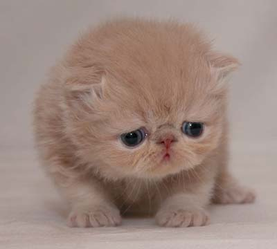 Alasan 5: Anak kucing sakit.