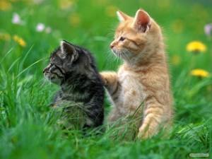 """daya tahan kucing 300x225 - Ingin Kucing Sehat ? """"Ditelorin"""" aja"""