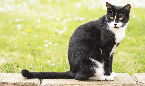 Yuk Kenali Sifat Si Mpus Lewat Warna Bulunya Kucing Lucu Net