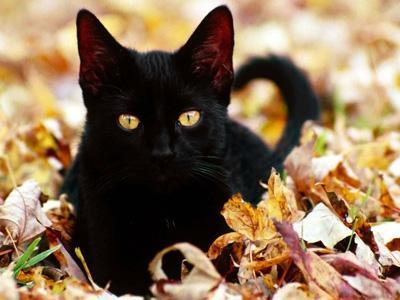 hitam - Yuk Kenali Sifat Si Mpus Lewat Warna Bulunya