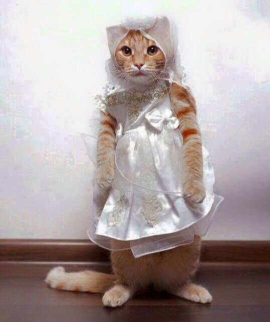 kucing lucu princess - Alasan Induk Kucing Tidak Mau Menyusui Anaknya