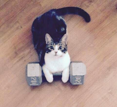 jangan memberi suplemen kucing secara berlebihan.