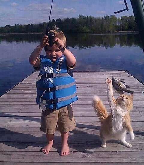 Hindari pemberian ikan mentah untuk kucing.