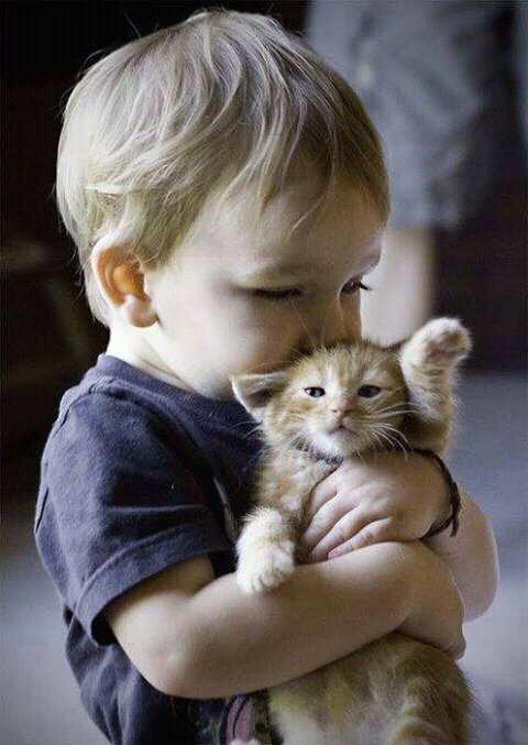 FB IMG 14620688130402449 - Story: Harga Seekor Anak Kucing yang Cacat