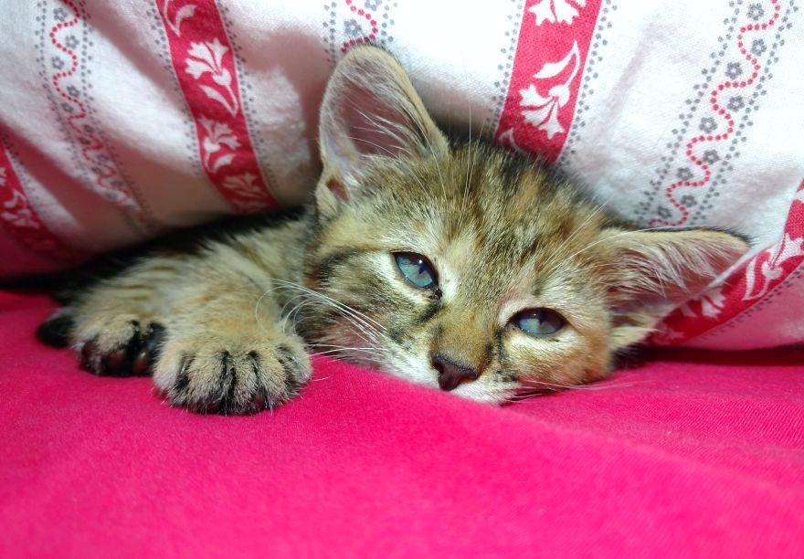 cat sleep 2 - 6 Fakta Unik Tentang Kebiasaan Tidur Kucing