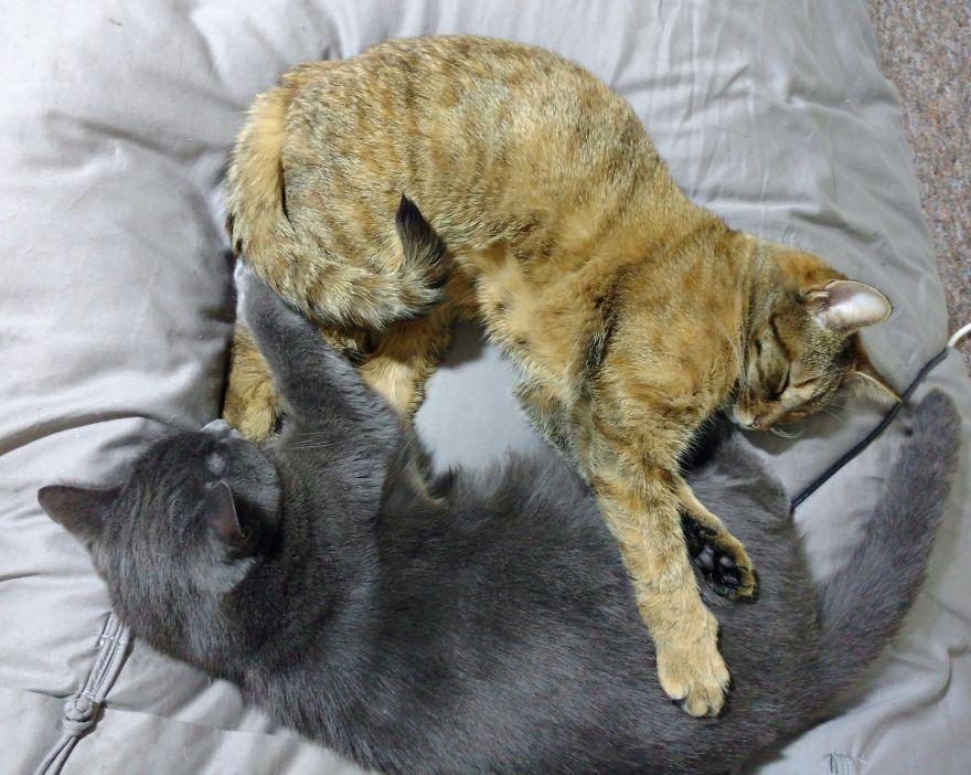 cat sleep 3 - 6 Fakta Unik Tentang Kebiasaan Tidur Kucing