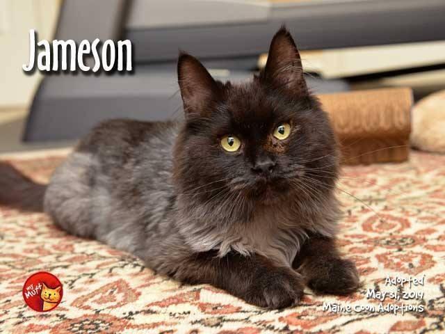 jameson 2 - Ditemukan dengan Tubuh Tinggal Tulang dan Kulit, Lihat Perubahan Kucing ini Sekarang