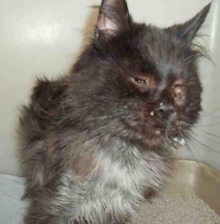 jameson - Ditemukan dengan Tubuh Tinggal Tulang dan Kulit, Lihat Perubahan Kucing ini Sekarang