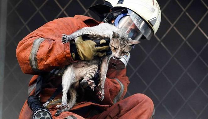 petugas kebakaran menyelamatkan seekor kucing di kebakaran pasar Senen (19/01).