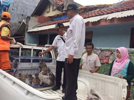 razia - Cegah Rabies, 40 Kucing Liar Kampung Rawa Dirazia