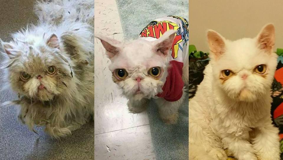 sinbad 8 - Lagi Lagi, Seekor Kucing Nyaris Terbunuh Karena Bulunya Sendiri