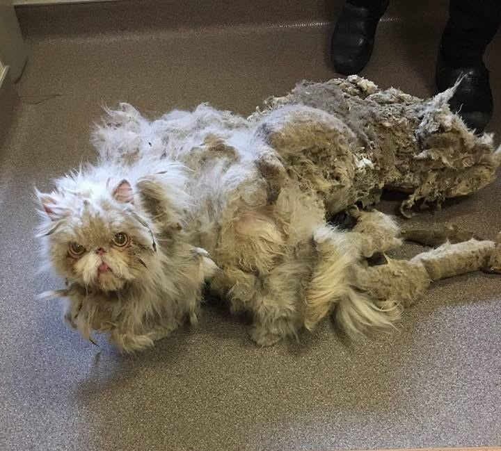 sinbad - Lagi Lagi, Seekor Kucing Nyaris Terbunuh Karena Bulunya Sendiri